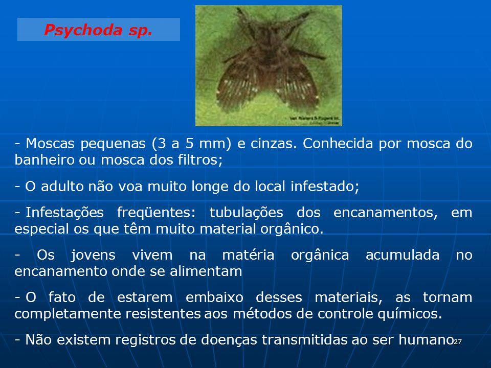 Importância da drosophila melanogaster para a ciência 7