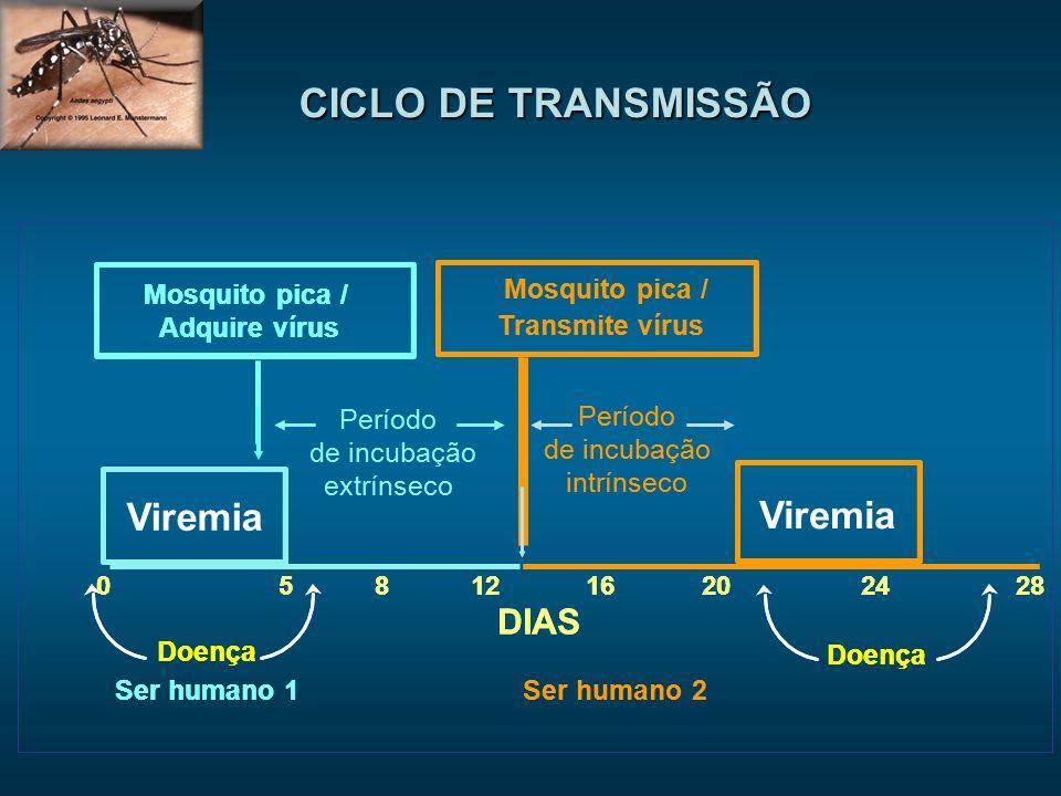 CICLO DE TRANSMISSÃO Viremia Viremia DIAS DIAS Mosquito pica /