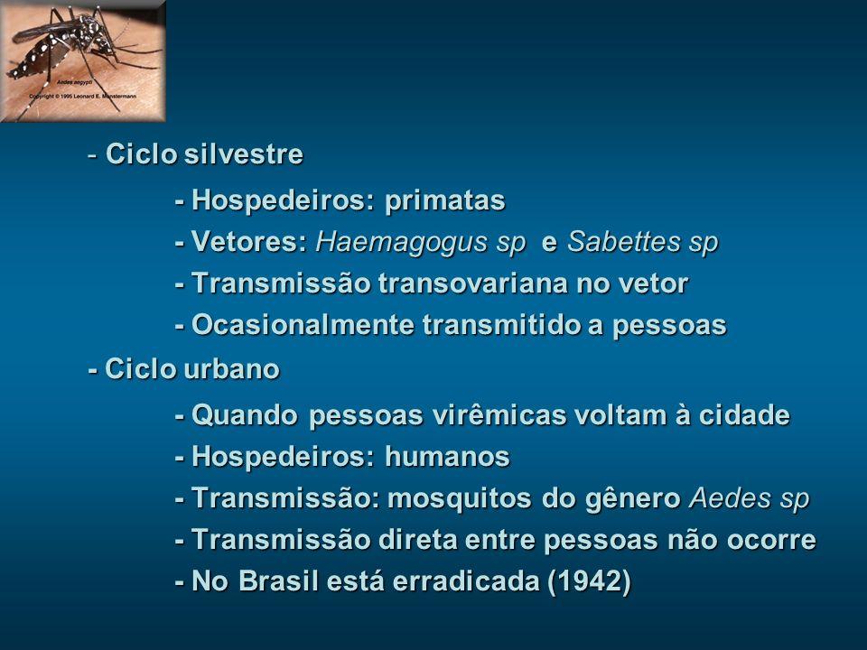 Ciclo silvestre - Hospedeiros: primatas. - Vetores: Haemagogus sp e Sabettes sp. - Transmissão transovariana no vetor.