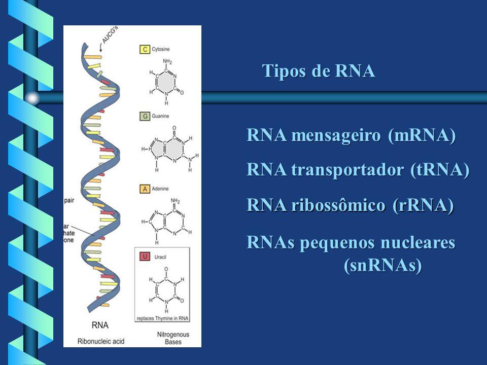 Tipos de RNARNA mensageiro (mRNA) RNA transportador (tRNA) RNA ribossômico (rRNA) RNAs pequenos nucleares.
