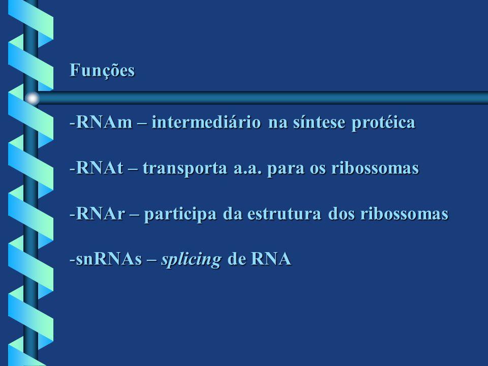 Funções RNAm – intermediário na síntese protéica. RNAt – transporta a.a. para os ribossomas. RNAr – participa da estrutura dos ribossomas.