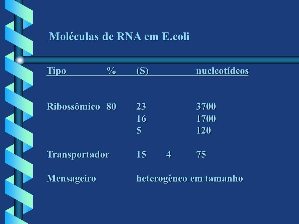 Moléculas de RNA em E.coli