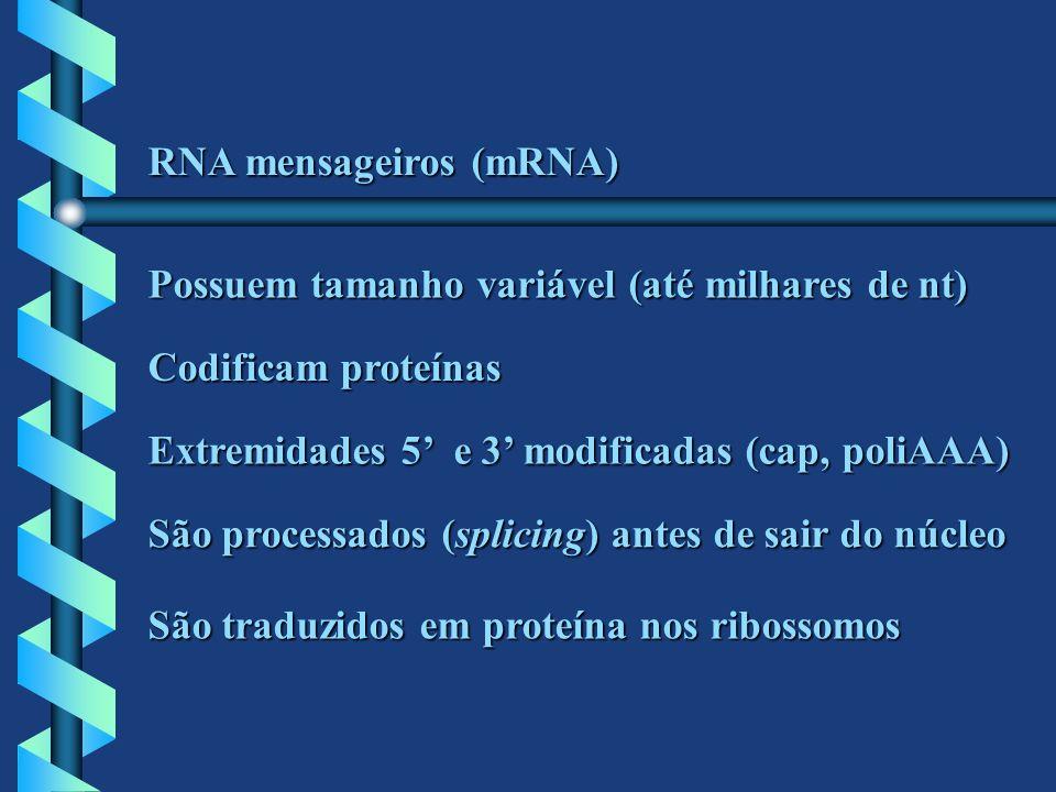 RNA mensageiros (mRNA)