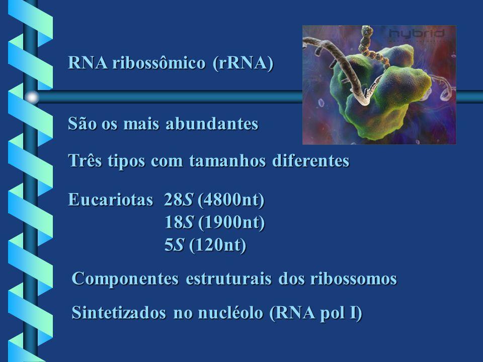 RNA ribossômico (rRNA)