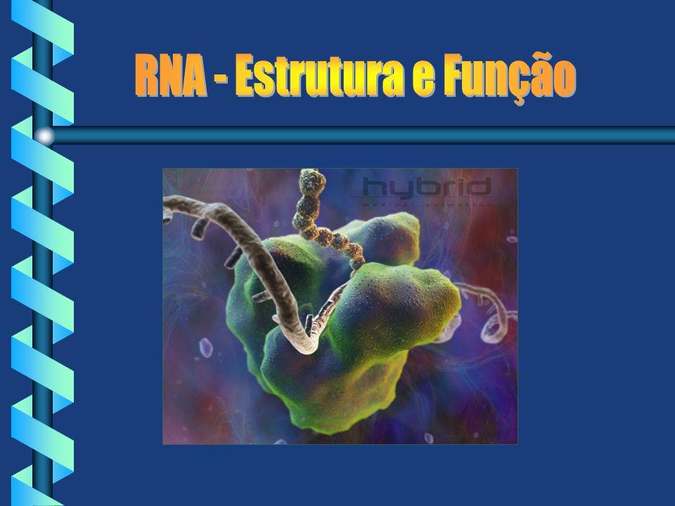 RNA - Estrutura e Função