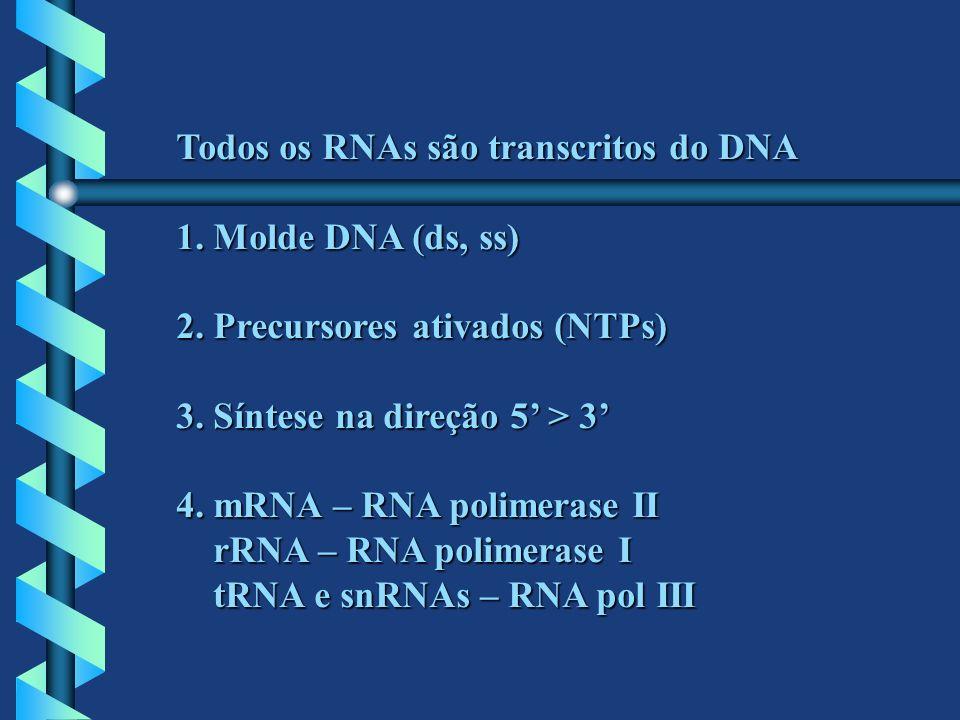 Todos os RNAs são transcritos do DNA