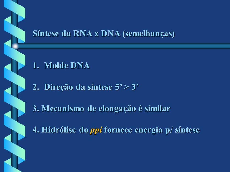 Síntese da RNA x DNA (semelhanças)