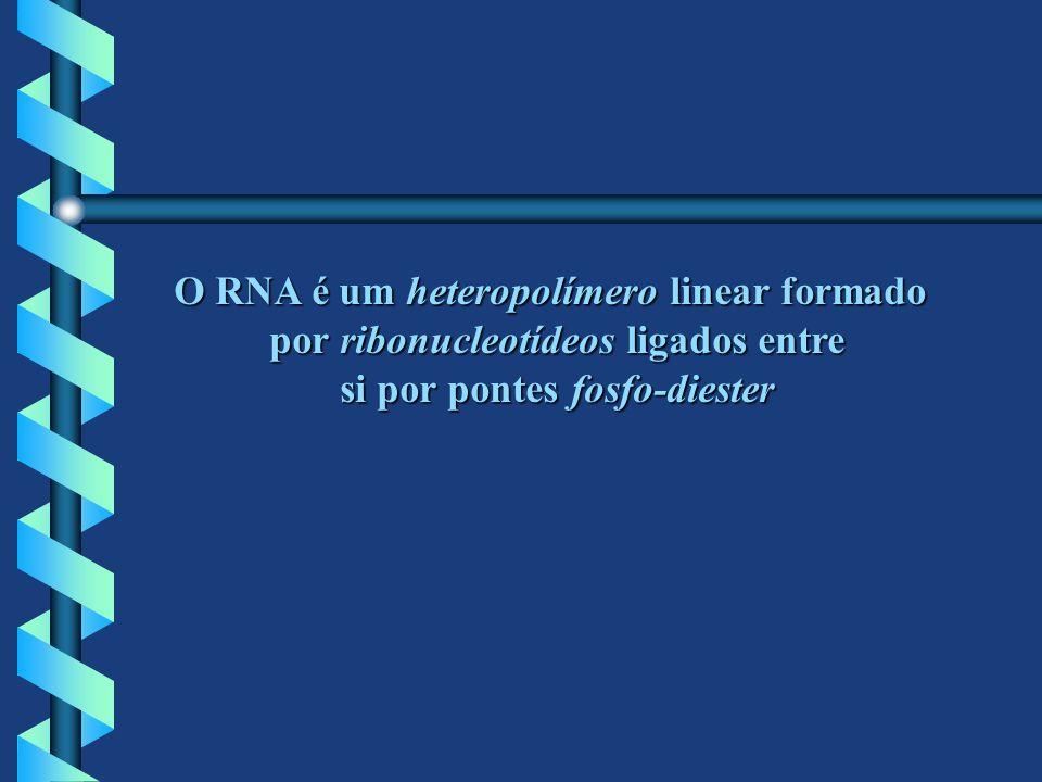 O RNA é um heteropolímero linear formado