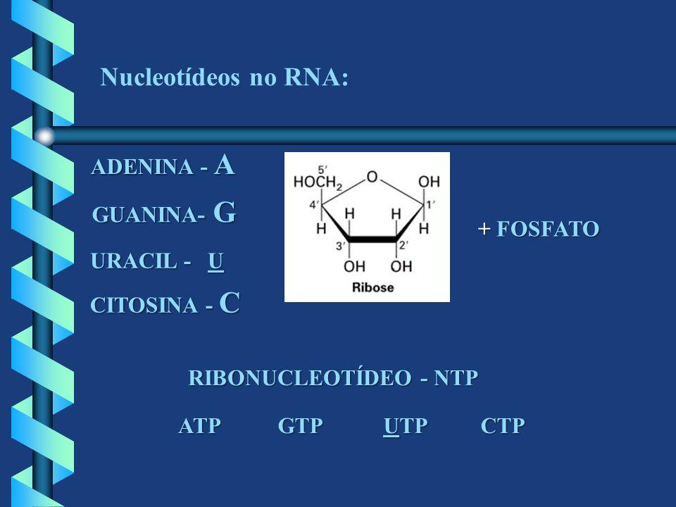 Nucleotídeos no RNA: ADENINA - A GUANINA- G + FOSFATO URACIL - U