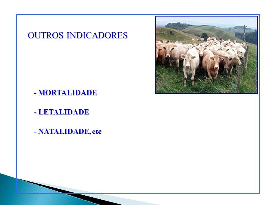 OUTROS INDICADORES - MORTALIDADE - LETALIDADE - NATALIDADE, etc