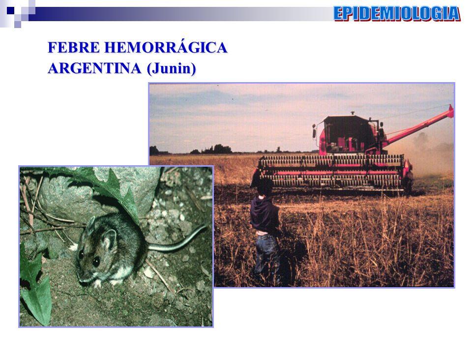 EPIDEMIOLOGIA FEBRE HEMORRÁGICA ARGENTINA (Junin)
