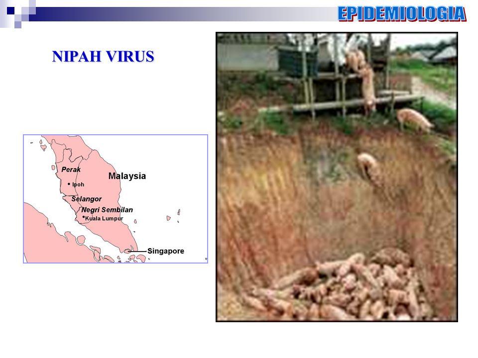 EPIDEMIOLOGIA NIPAH VIRUS