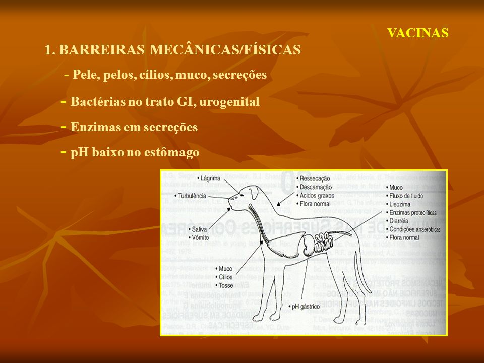 1. BARREIRAS MECÂNICAS/FÍSICAS