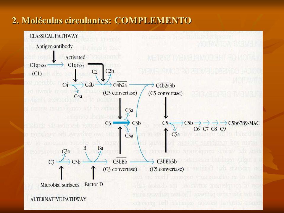 2. Moléculas circulantes: COMPLEMENTO