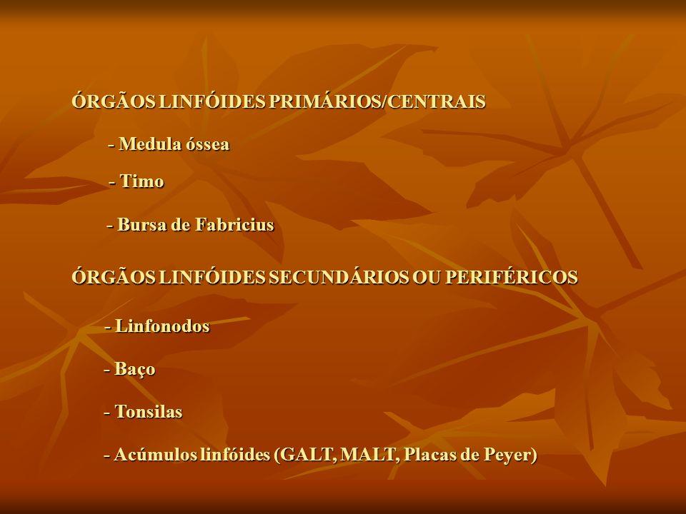 ÓRGÃOS LINFÓIDES PRIMÁRIOS/CENTRAIS