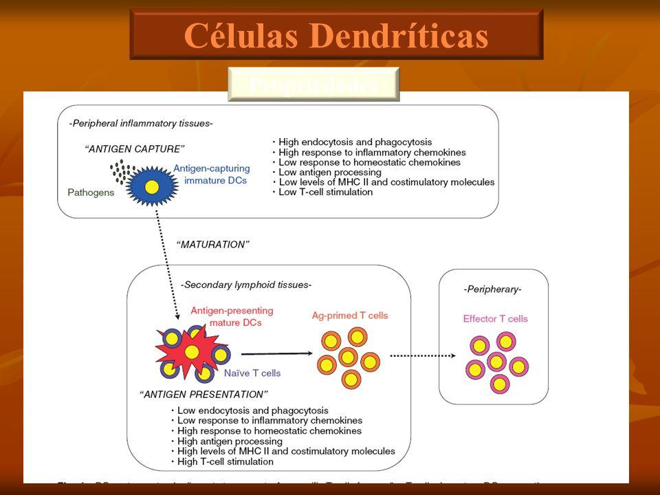 Células Dendríticas Propriedades