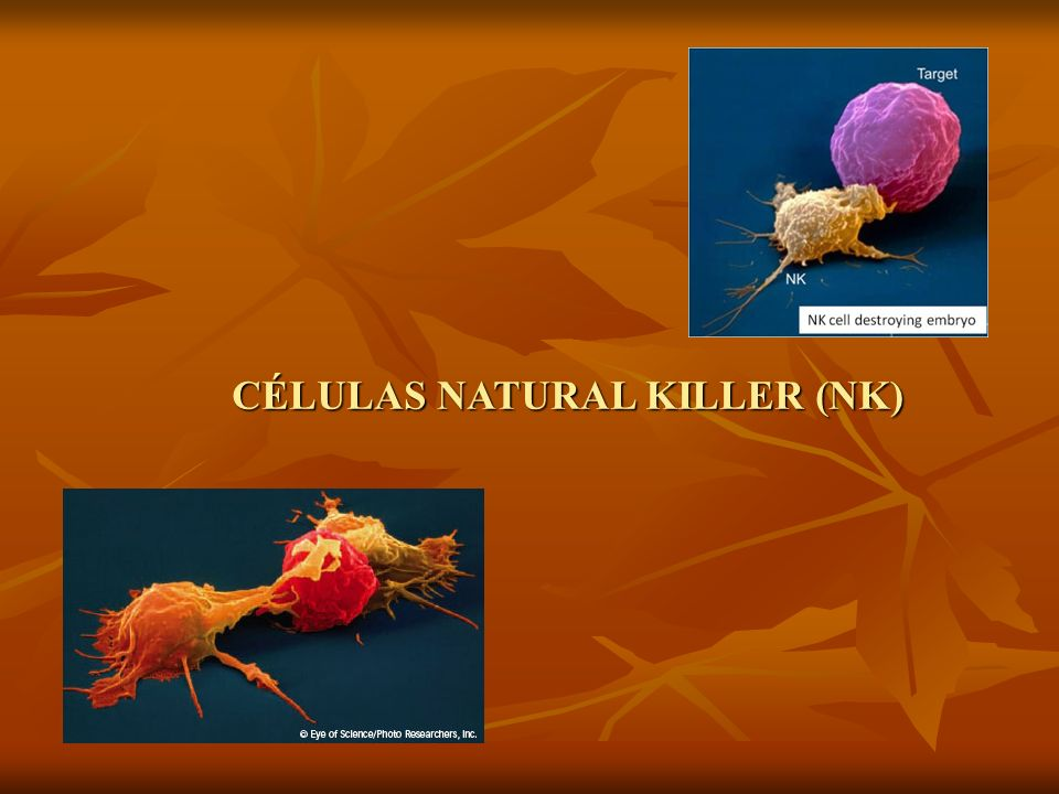 CÉLULAS NATURAL KILLER (NK)