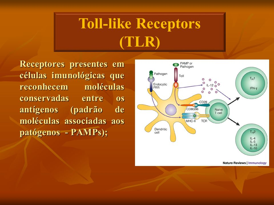Toll-like Receptors (TLR)
