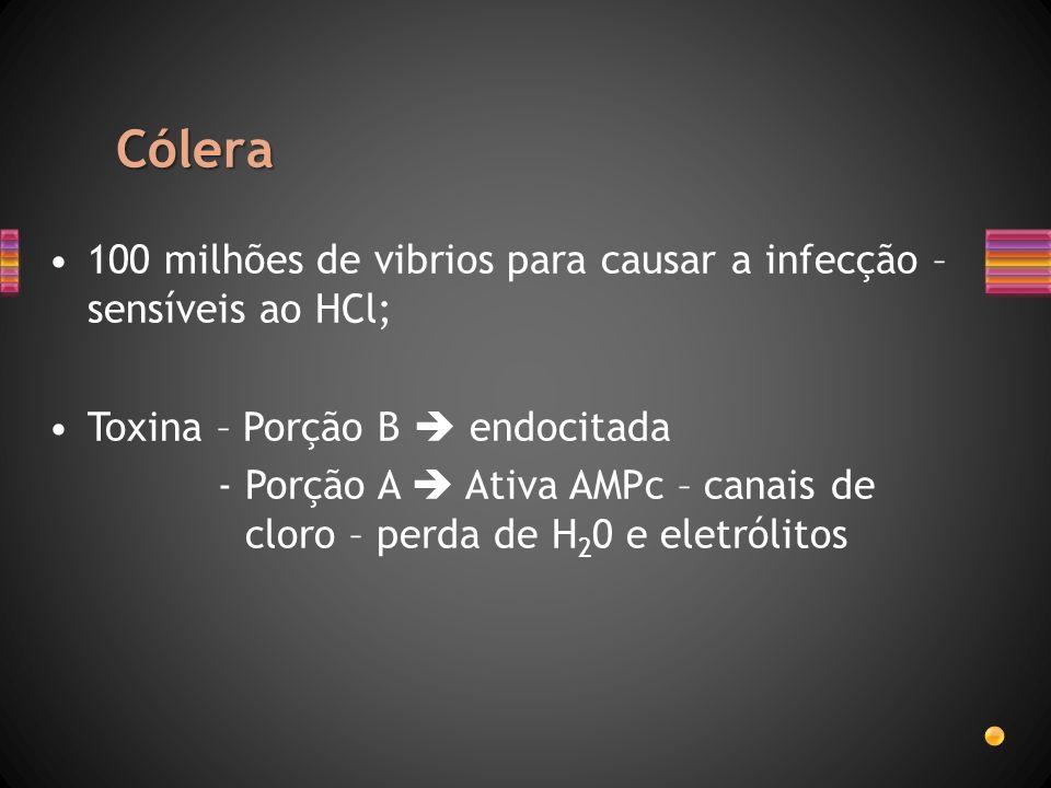 Cólera 100 milhões de vibrios para causar a infecção – sensíveis ao HCl; Toxina – Porção B  endocitada.