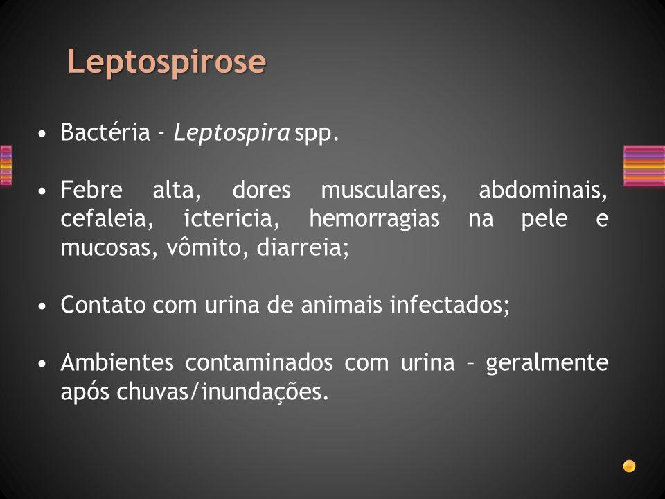 Leptospirose Bactéria - Leptospira spp.