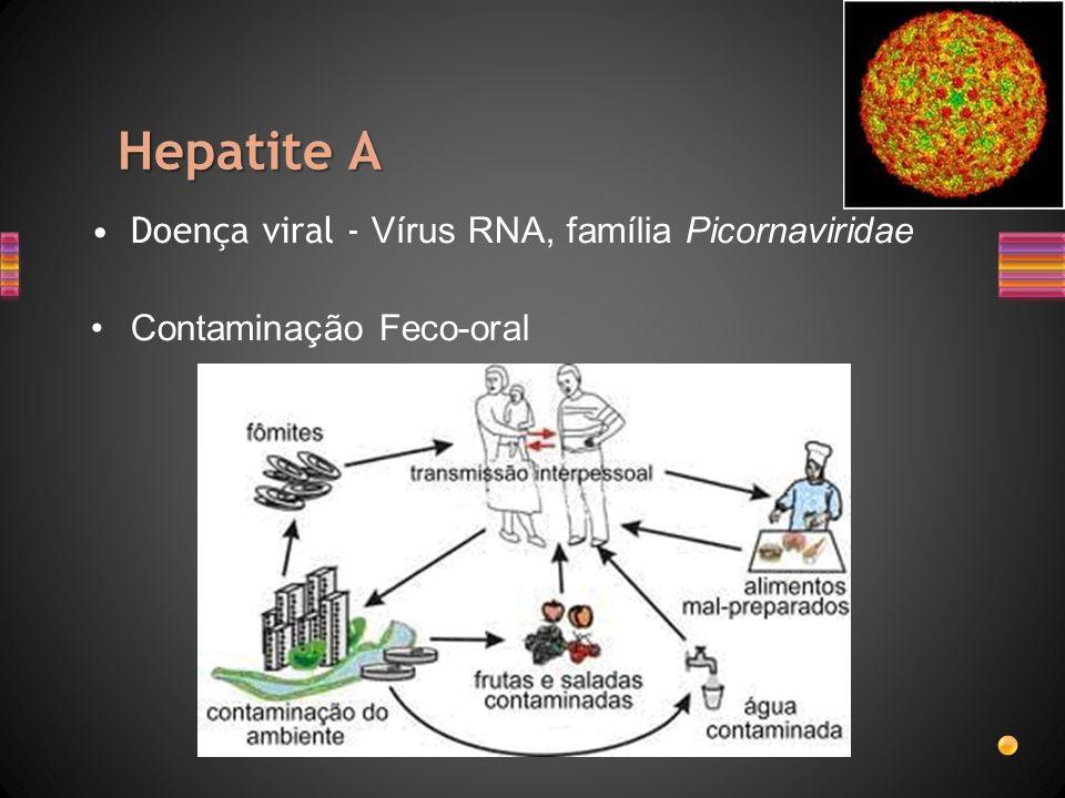 Hepatite A Doença viral - Vírus RNA, família Picornaviridae