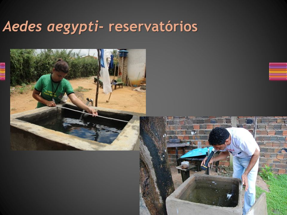 Aedes aegypti- reservatórios