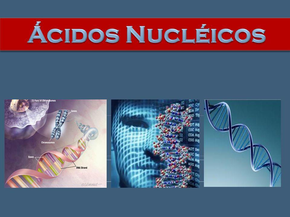 Ácidos Nucléicos