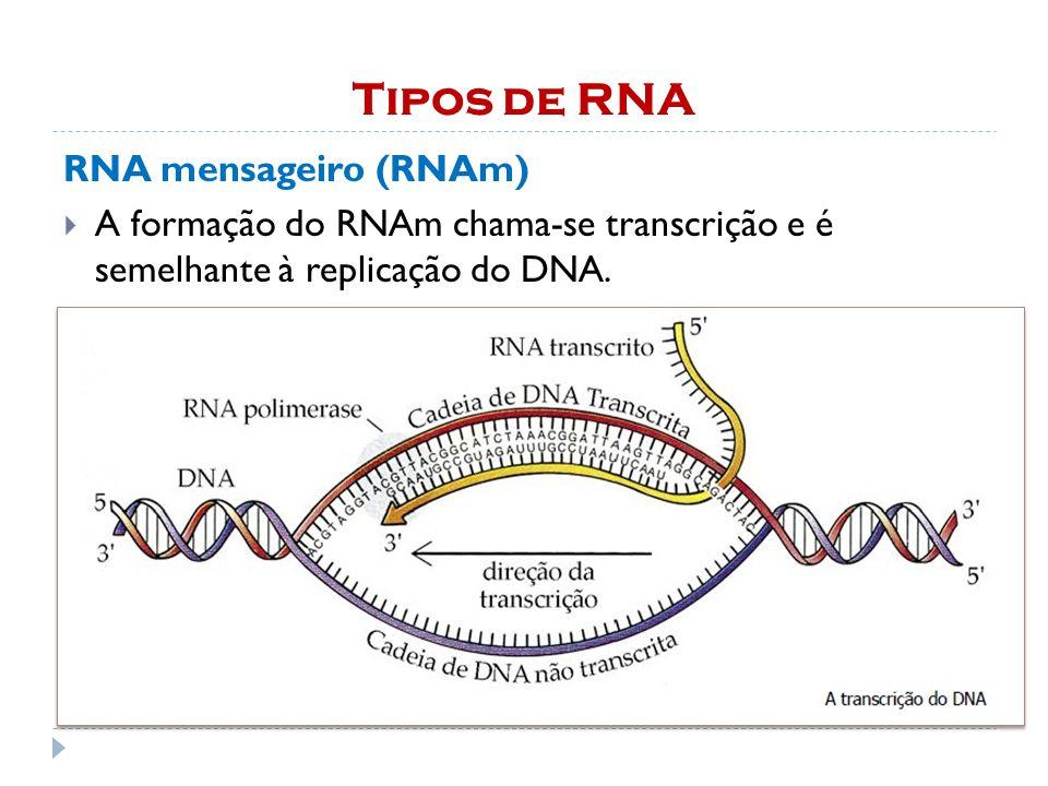 Tipos de RNA RNA mensageiro (RNAm)