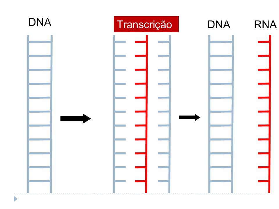 DNA Transcrição DNA RNA