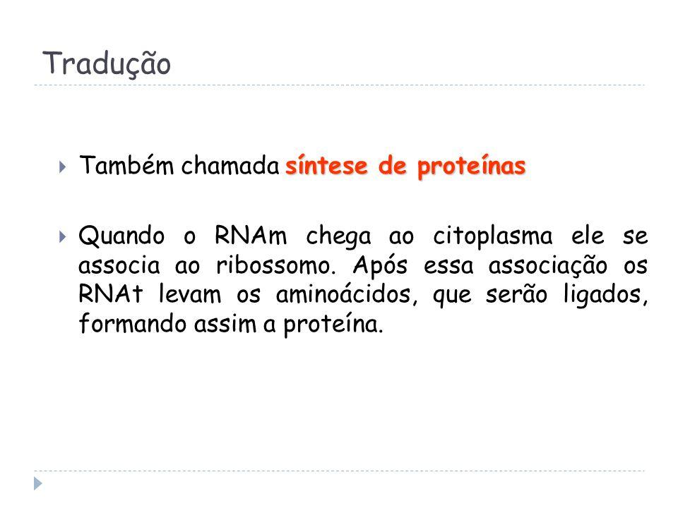 Tradução Também chamada síntese de proteínas