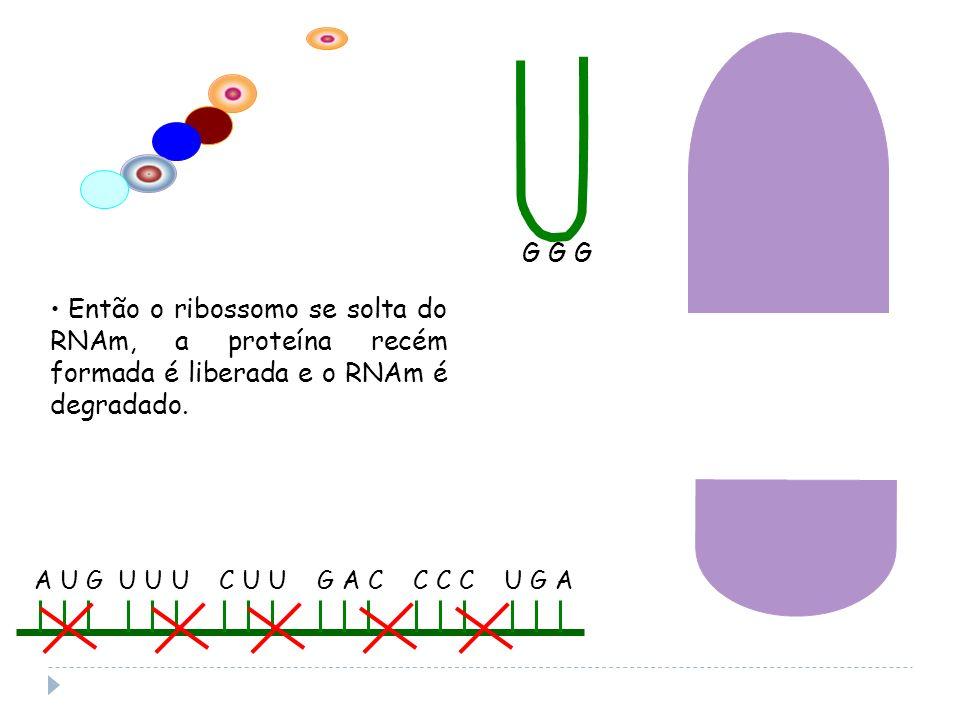 G G G Então o ribossomo se solta do RNAm, a proteína recém formada é liberada e o RNAm é degradado.