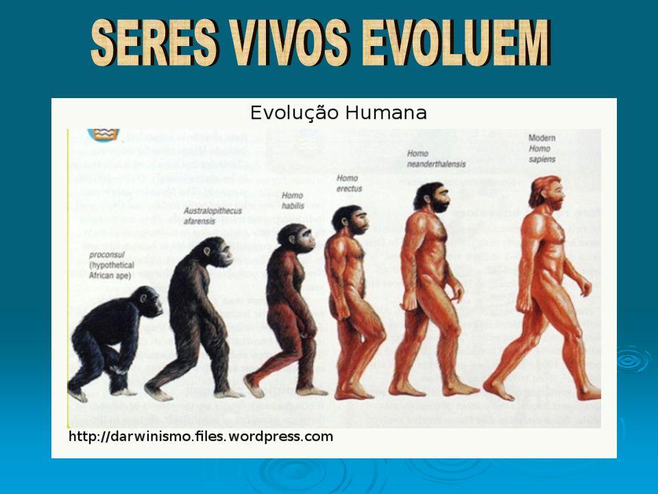 SERES VIVOS EVOLUEM