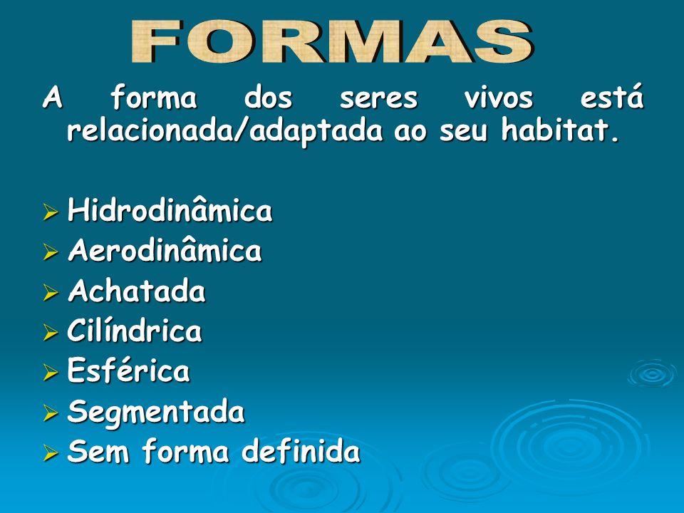FORMASA forma dos seres vivos está relacionada/adaptada ao seu habitat. Hidrodinâmica. Aerodinâmica.