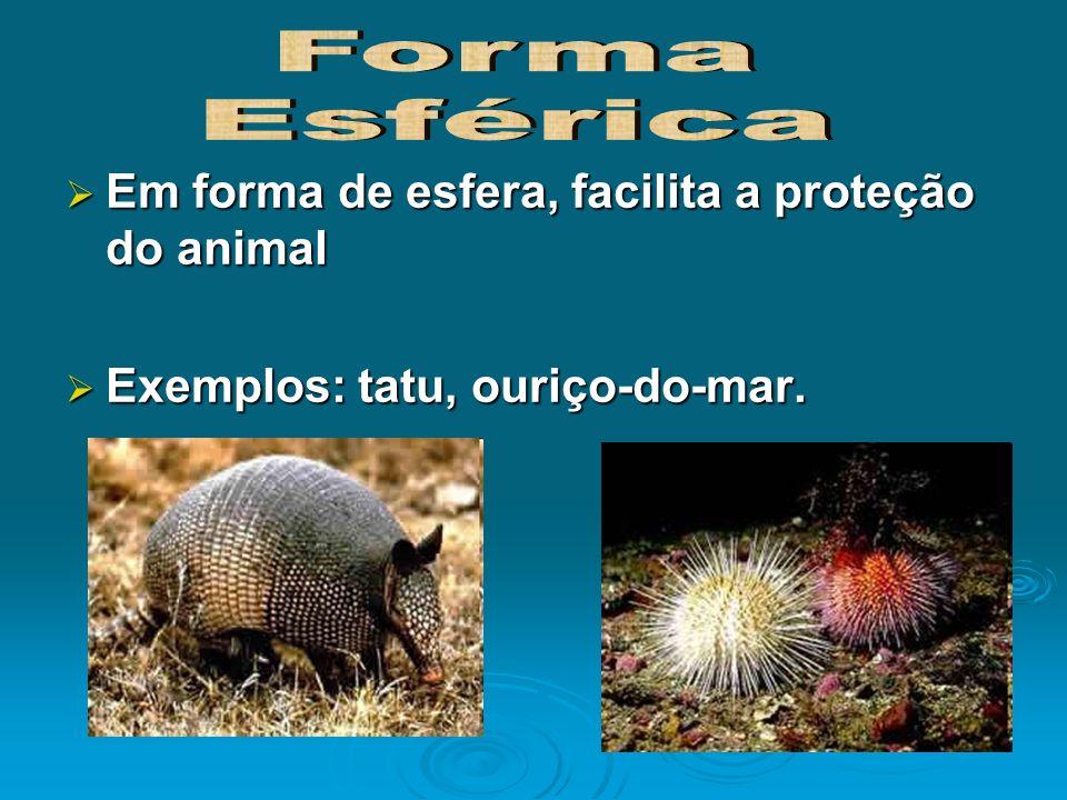 Forma Esférica Em forma de esfera, facilita a proteção do animal