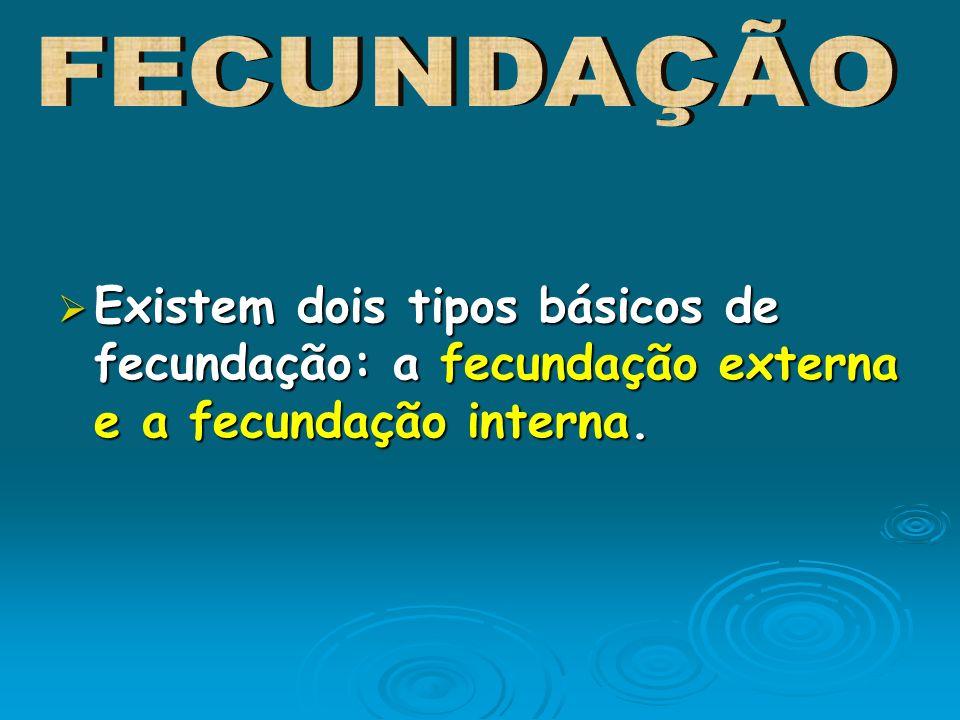 FECUNDAÇÃO Existem dois tipos básicos de fecundação: a fecundação externa e a fecundação interna.