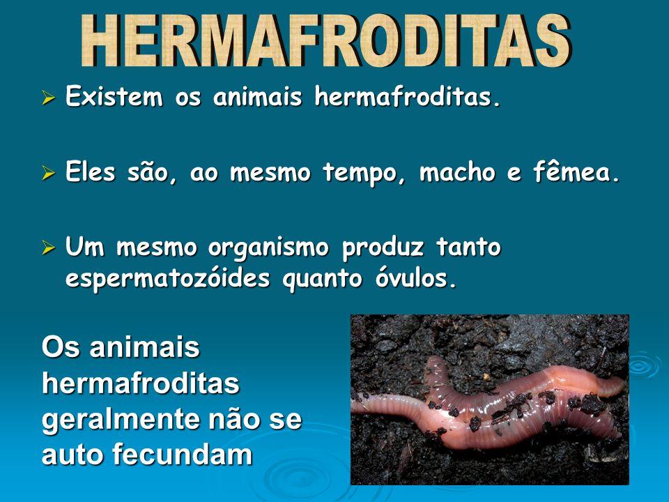 Os animais hermafroditas geralmente não se auto fecundam