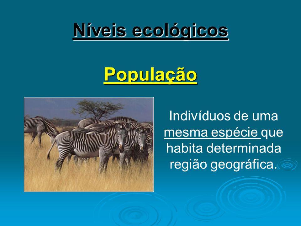 Níveis ecológicos População