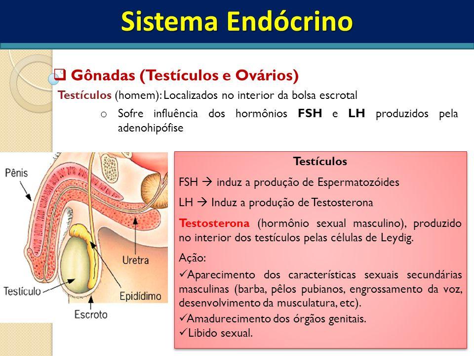 Sistema Endócrino Gônadas (Testículos e Ovários)
