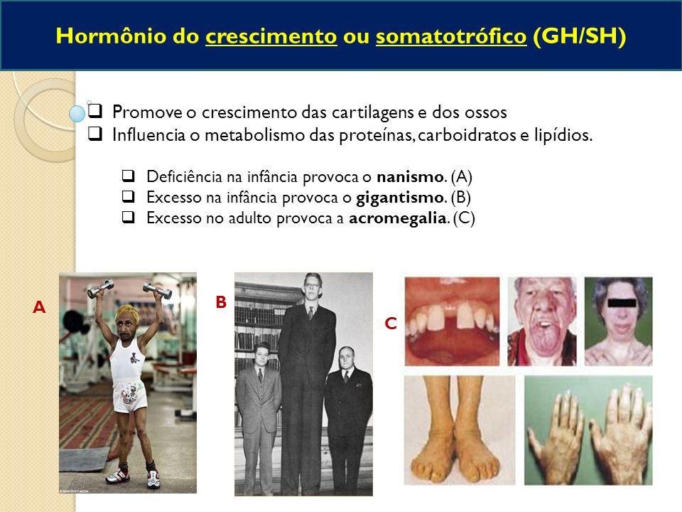 Hormônio do crescimento ou somatotrófico (GH/SH)