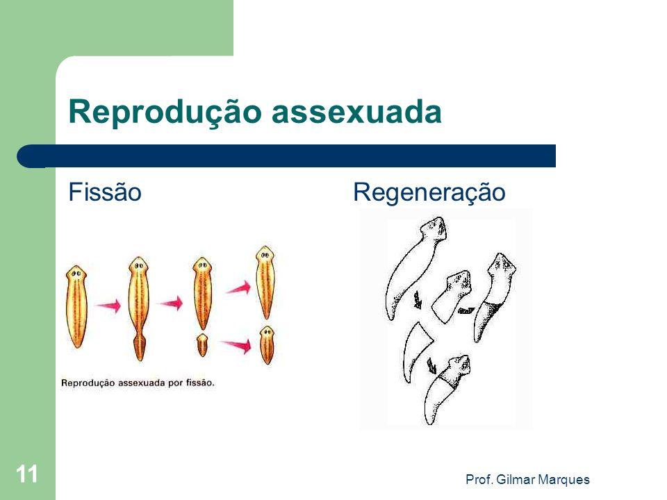 Reprodução assexuada Fissão Regeneração Prof. Gilmar Marques