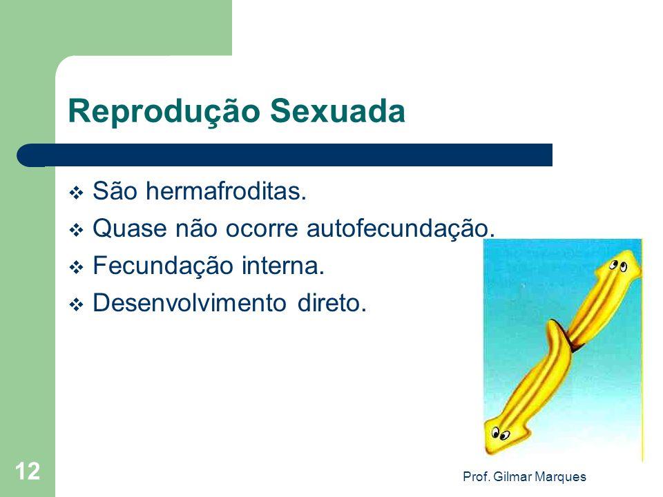 Reprodução Sexuada São hermafroditas. Quase não ocorre autofecundação.
