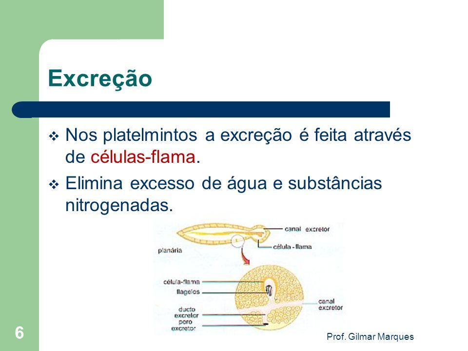 Excreção Nos platelmintos a excreção é feita através de células-flama.