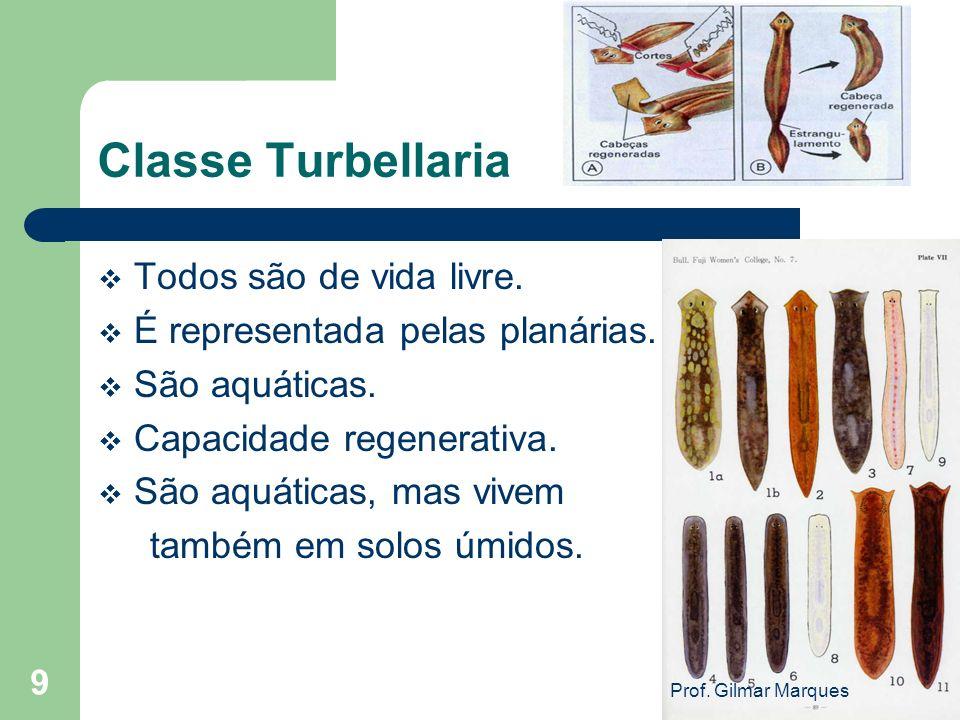 Classe Turbellaria Todos são de vida livre.