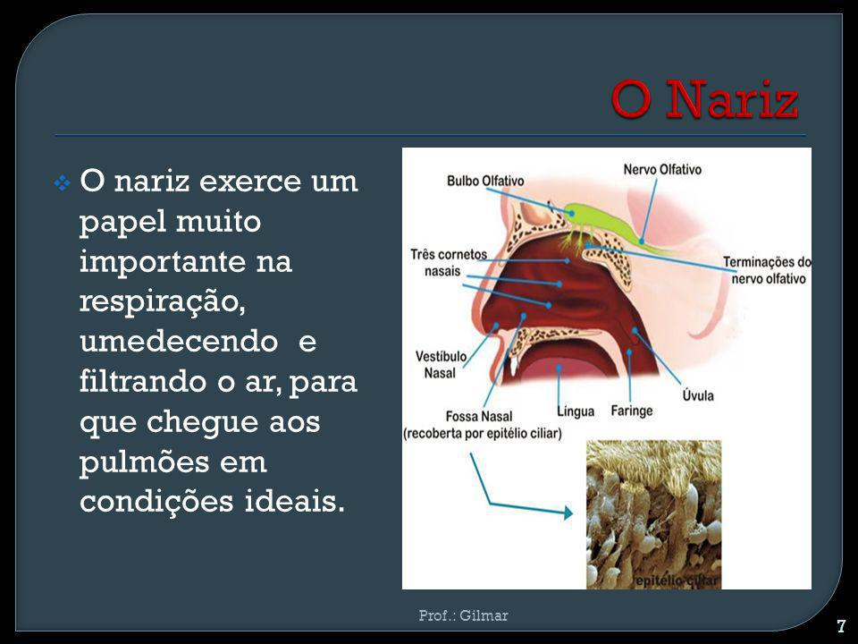 O Nariz O nariz exerce um papel muito importante na respiração, umedecendo e filtrando o ar, para que chegue aos pulmões em condições ideais.