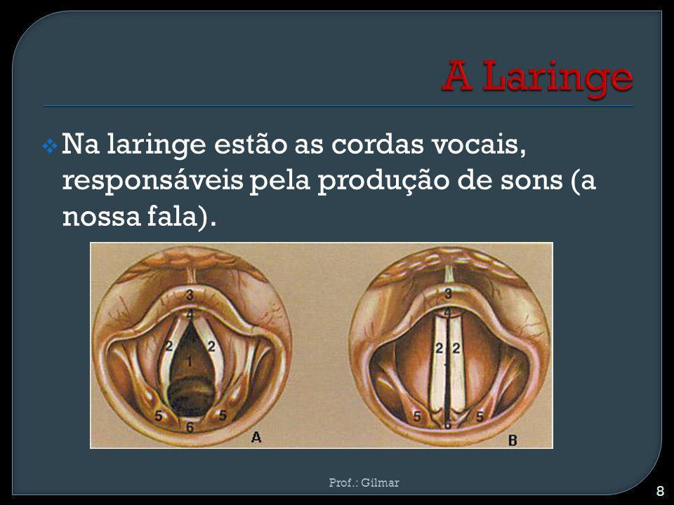 A Laringe Na laringe estão as cordas vocais, responsáveis pela produção de sons (a nossa fala).