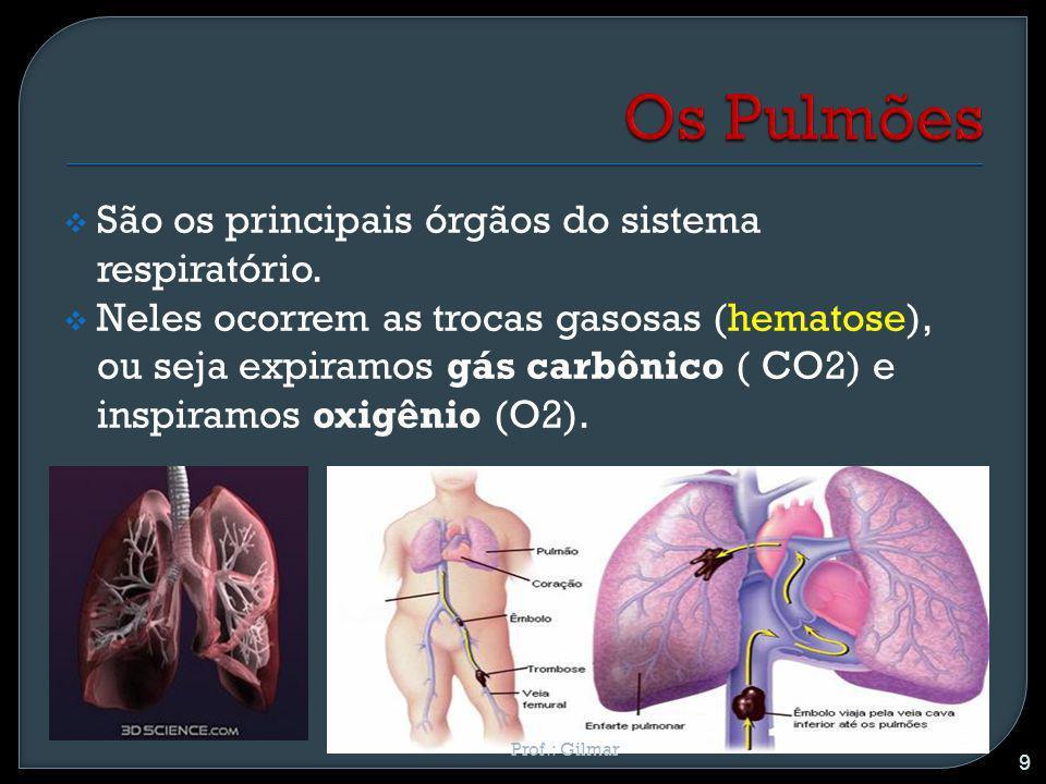 Os Pulmões São os principais órgãos do sistema respiratório.