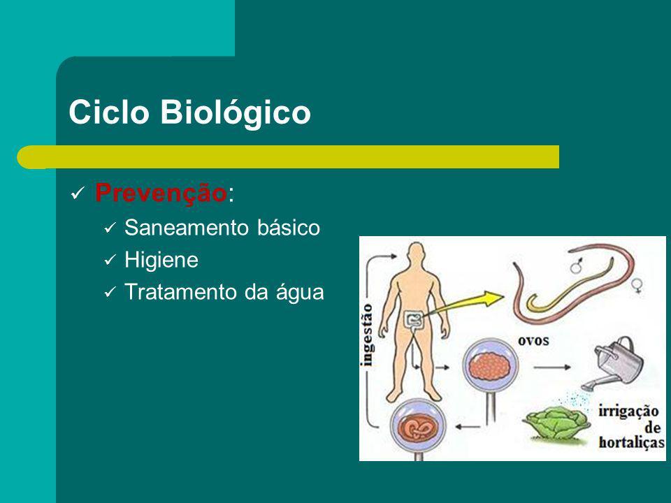 Ciclo Biológico Prevenção: Saneamento básico Higiene