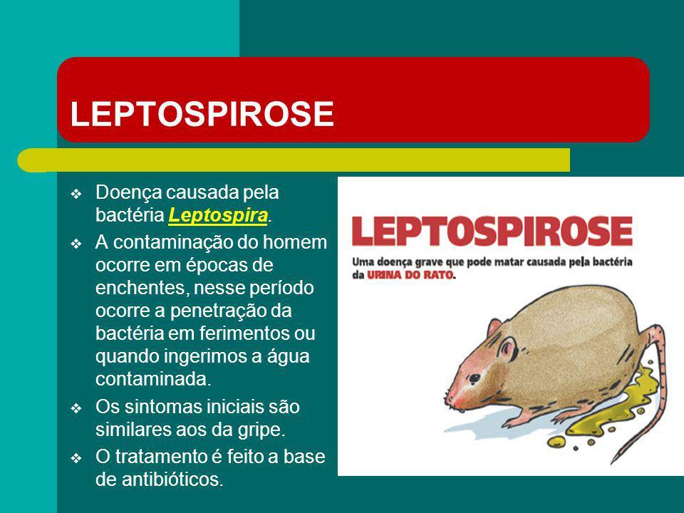 LEPTOSPIROSE Doença causada pela bactéria Leptospira.