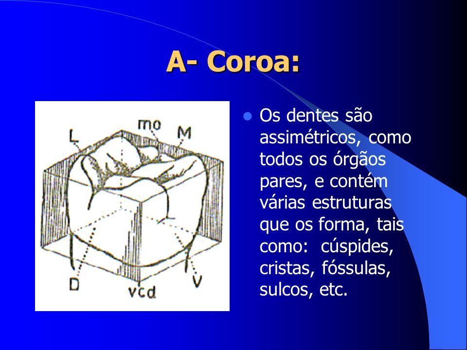A- Coroa: