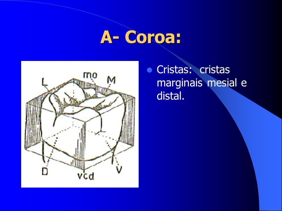 A- Coroa: Cristas: cristas marginais mesial e distal.